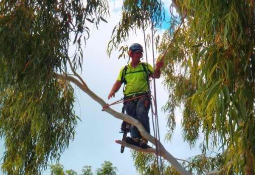 Arborist Reports Oak Valley